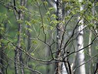 木の枝にとまる小鳥