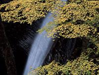 紅葉した樹木と滝