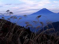 富士山とススキ 11014023411| 写真素材・ストックフォト・画像・イラスト素材|アマナイメージズ
