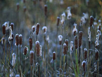 冬の草木 11014023414| 写真素材・ストックフォト・画像・イラスト素材|アマナイメージズ