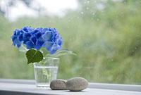 窓際のアジサイと小石