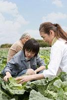 キャベツを収穫する祖父母と孫