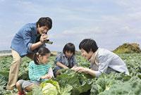 畑のキャベツを観察する親子4人