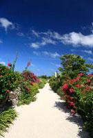 ハイビスカスが咲く竹富島の道