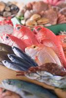 鮮魚集合イメージ