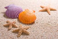 砂の上の貝殻とヒトデ