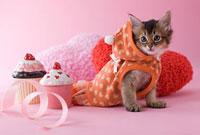 ソマリのバレンタインイメージ 11014028939  写真素材・ストックフォト・画像・イラスト素材 アマナイメージズ
