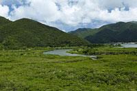 マングローブ原生林 奄美大島