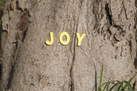 The word joy on a tree trunk