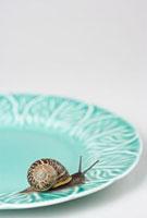 A snail on a plate 11015191622| 写真素材・ストックフォト・画像・イラスト素材|アマナイメージズ