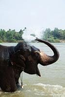 Elephant bating in Tungabhadra river, Hampi, Karnataka, Indi