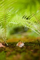 Snail in ferns