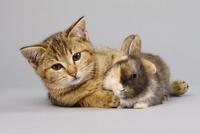 Kitten and rabbit