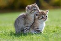 Two kittens on grass 11015206462| 写真素材・ストックフォト・画像・イラスト素材|アマナイメージズ