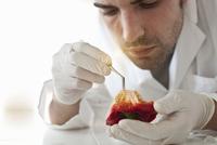 Scientist examining seeds of bell pepper