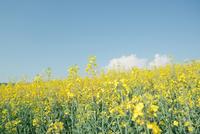 Field of flowers under blue sky
