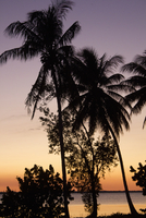 Silhouette of palm trees at sunset