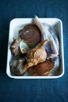 Sea shells for traditional Japanese dish