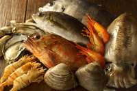 Still life with selection of seafood