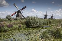 Windmills and canal marsh, Kinderdijk, Netherlands