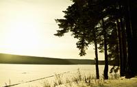 Trees by lake 11015242043| 写真素材・ストックフォト・画像・イラスト素材|アマナイメージズ