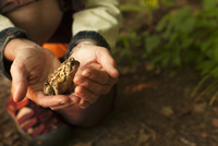 Close up of hands holding a toad