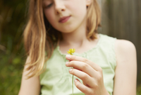Cropped shot of girl with holding dandelion flower 11015247365| 写真素材・ストックフォト・画像・イラスト素材|アマナイメージズ