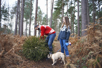 Young couple and dog lifting Christmas tree in woods