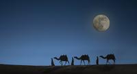 Camel caravan with night sky and full moon, Dubai, United Arab Emirates