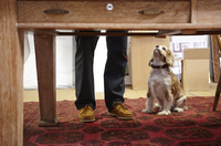 Mans legs and dog looking up in picture framers workshop