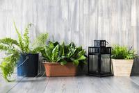 Row of potted plants on grey wooden floor 11015250032  写真素材・ストックフォト・画像・イラスト素材 アマナイメージズ