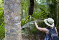 Woman exploring jungle, Waiheke Island, North Island, New Zealand