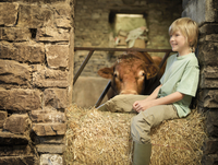 Farmer's son sitting with bull in barn