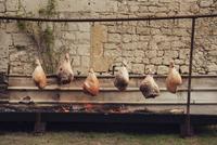Traditional french roasting of hams 11015253532| 写真素材・ストックフォト・画像・イラスト素材|アマナイメージズ