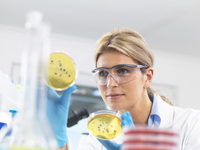 Female technician viewing agar (culture medium) plates with bacteria in a laboratory
