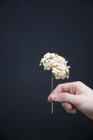 Person holding dried hydrangea flower 11015254649| 写真素材・ストックフォト・画像・イラスト素材|アマナイメージズ