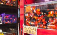 Fish in tank, fish market, Mong Kok, Hong Kong, China