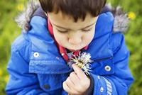 Portrait of boy in blue coat blowing dandelion clock 11015255785| 写真素材・ストックフォト・画像・イラスト素材|アマナイメージズ
