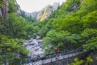 Female hiker crossing footbridge on way to Daecheongbong peak,  Seoraksan National Park in South Korea