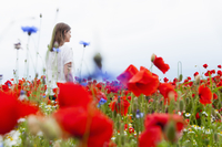 Mid adult woman walking through poppy field, rear view