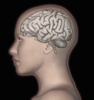 3D computer rendering of the human brain superimposed over the head of a woman