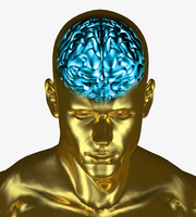 Illustration of the brain inside the skull of an adult man