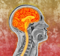Colorized antique illustration of the human brain