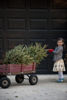 Portrait of a girl pushing cart with christmas tree
