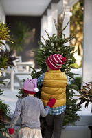 Girl and boy carrying christmas tree
