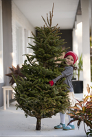 Girl carrying a christmas tree