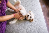 Mid adult woman stroking dog