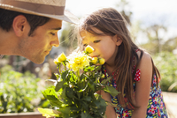 Mid adult man and daughter smelling yellow flowers in community garden