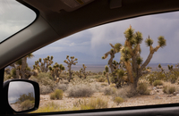 View of joshua trees from car window, Snow Canyon State Park, Utah, USA