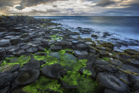 High angle view of moss covered Giants Causeway and blue ocean, Bushmills, County Antrim, Ireland, UK